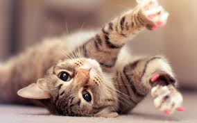 mobile phone kittens kitten hd cat wallpapers best friendcats pets s pet 1920x1200 wallpaper hd