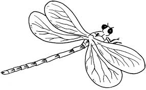 Small Picture Dragonfly Coloring Page Super Bebo Pandco