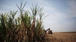 London Sugar Futures Price Investing Com India
