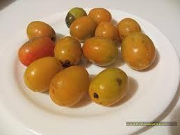 19 Weird And Exotic Fruits Of Loja Ecuador Lily Ann