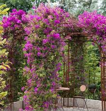 Small Picture 247 best Spanish garden images on Pinterest Home Spanish garden