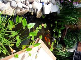 aquarium fish paradise adelaide sa