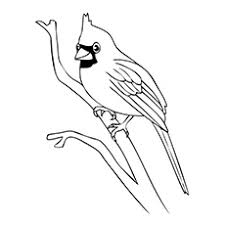 Small Picture Top 20 Free Printable Bird Coloring Pages Online
