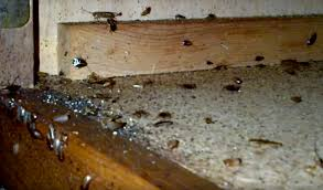 kitchen roaches in kitchen incredible on intended how to get rid