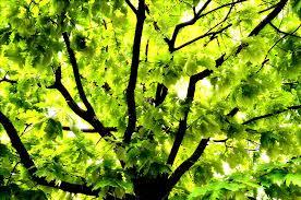 Bright Tree Photograph by Patrick Bentz