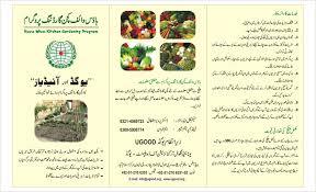 Kitchen Gardening Ugood Ngo Ngo In Pakistan United Global Organization Of Development