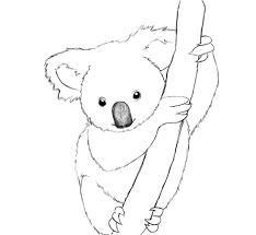 Small Picture Popular Koala Coloring Page Nice KIDS Coloring 6755 Unknown
