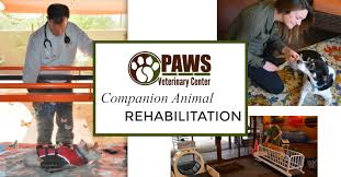 What Is Rehab Paws Veterinary Center Veterinarian In Tucson Az Us What Is Rehab