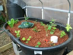 aquaponic gardening. thursday, september 1, 2011 aquaponic gardening