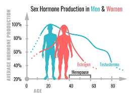 Sexual hormones of women