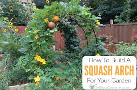 how to build a squash arch for your garden