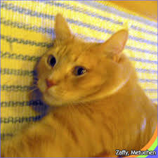 friends of happy catsndogs pet care we provide pet care services happy catsndogs pet care