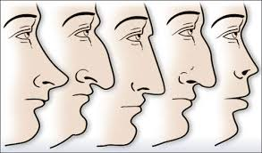 Image result for nose shapes like round , aqualine and names full size