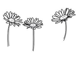 tumblr transparents black and white flowers. Perfect Tumblr Basic Black And White Flowers Pretty Transparent Tumblr Transparents Throughout Tumblr Transparents Black And White Flowers Pinterest