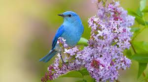 Best Bird wallpaper ID:404841 for High ...