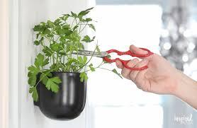 Vertical Kitchen Herb Garden Modern Kitchen Herb Garden Inspired By Charm