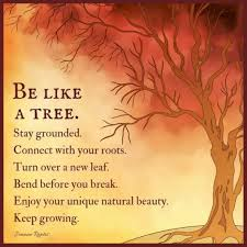 Tree Quotes Gorgeous Positive Life Quotes Life Sayings Be Like A Tree Stay Grounded