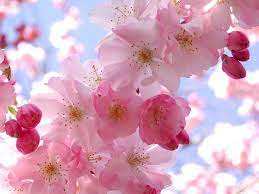 Spring Flowers Backgrounds Desktop ...