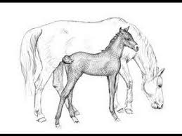 running horse drawing.  Drawing How To Draw A Running Horse And Drawing