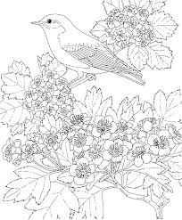 Blue Bird Coloring Pages Free Printable