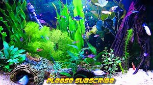 fish tank wallpapers. Delighful Tank On Fish Tank Wallpapers