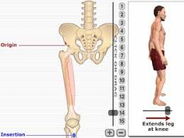 A collection of images of and quizzes on human anatomy. Mss Anatomy From Getbodysmart 7 Flashcards Quizlet
