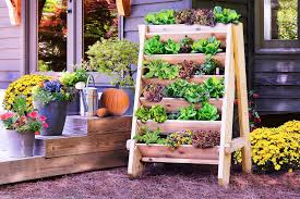 vertical planter with lettuce