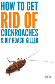 how to get rid of cockroaches and an easy diy roach