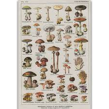 Botanical Chart Print Us 5 49 S2855 Mushroom Chart Education Fungus Botany Wall Art Painting Print On Silk Canvas Poster Home Decoration In Painting Calligraphy From