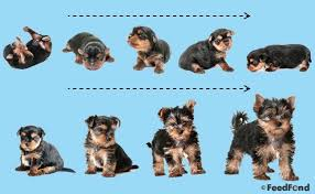 Puppy Development Growth Chart A Complete Guide For 2019
