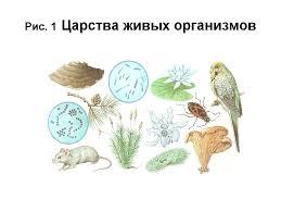 Одноклеточные организмы й класс