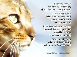 Loss Of A Cat Quotes New 48 Best Ideas About Pet Loss Grief On Pinterest Pet Loss Dog 67482