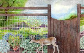 how to keep deer out of your garden. Illustration Of Fence For Keeping Deer Out The Garden How To Keep Your