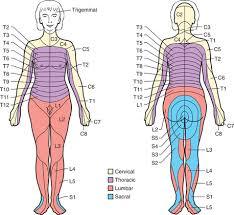Dermatomal Pattern Enchanting 48 Pain Clinical Gate