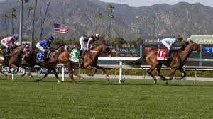 another horse fatality at santa anita 23 thoroughbreds have d since dec 26