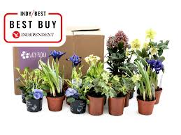 lazy flora seasonal plant collection subscription from 16 a month boxes received quarterly lazy flora