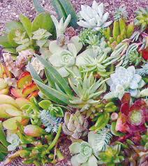 Heb Corsages Succulent Wreaths Can Resemble Home Christmas Corsages