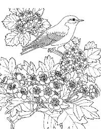 Small Picture scenic coloring pages coloring pages animal beautiful flower