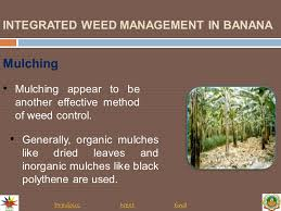 components of integrated weed management