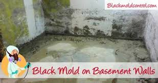 black mold in basement walls floors