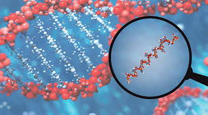 microRNA food ile ilgili görsel sonucu