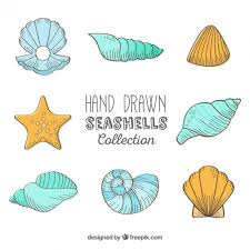 sea shells collection hand drawn seashells collection vector free download