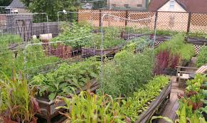 Small Picture Greenroof Benefits Tomato Clubs Nyc The Club Eco Plant Salad Nyc