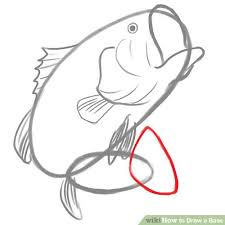 bass fish drawing step by step. Beautiful Step Image Titled Tailfin Step 4 To Bass Fish Drawing By I