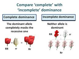 In codominance both alleles are dominant which leads to both alleles being expressed to a certain point. Genetics