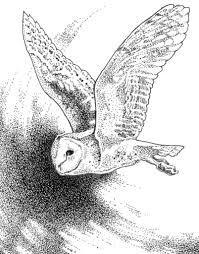 Small Picture Barn Owl Wings Coloring Coloring Pages