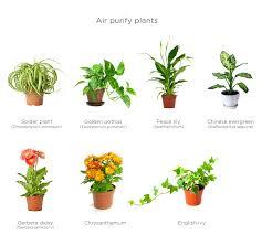 green wall air purifying plants