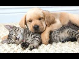 pictures of cute dogs and cats together. Funny Cats And Dogs Sleeping Together Cute Animals Videos Compilation 2015 Throughout Pictures Of