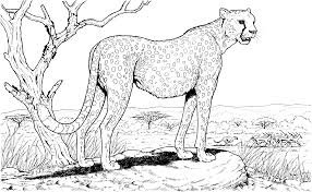 Small Picture Cute Animal Coloring Pages Hard Coloring Coloring Pages