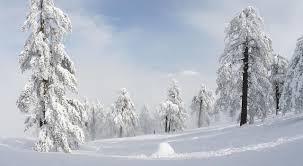 雪の場合のルール |YCC湯田カントリー倶楽部
